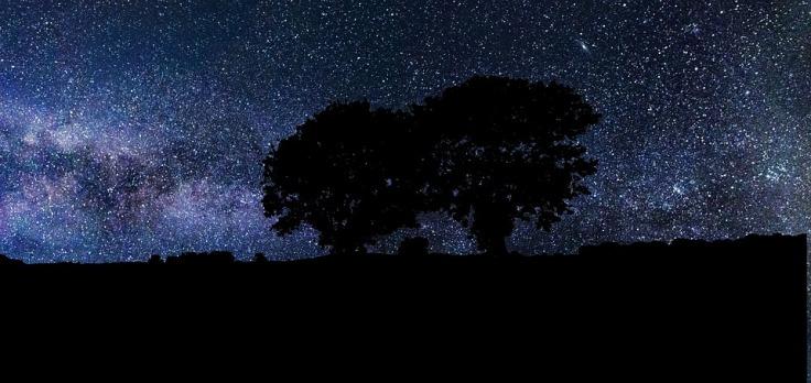 Sky Universe Night Trees Nature Dark Stars